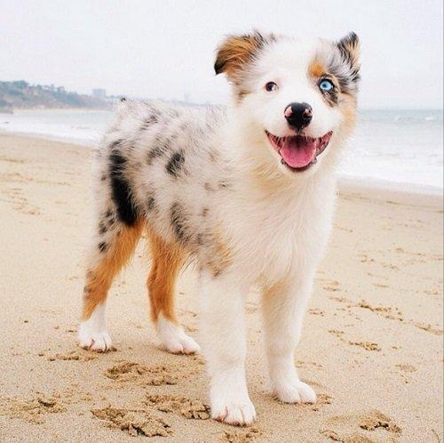 17 причин завести дома собаку: эти существа способны подарить человеку настоящее счастье!