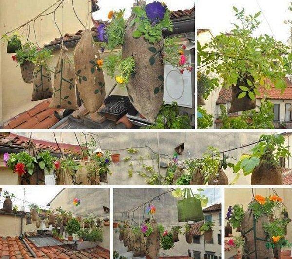 подвешенные растения