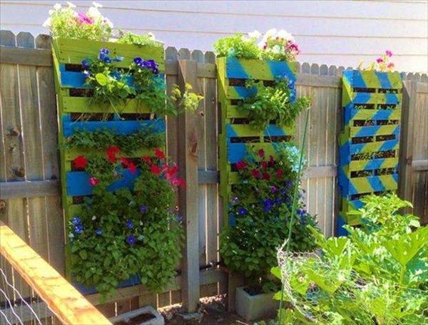 идея для выращивания цветов