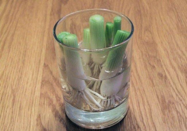 зеленый лук дома