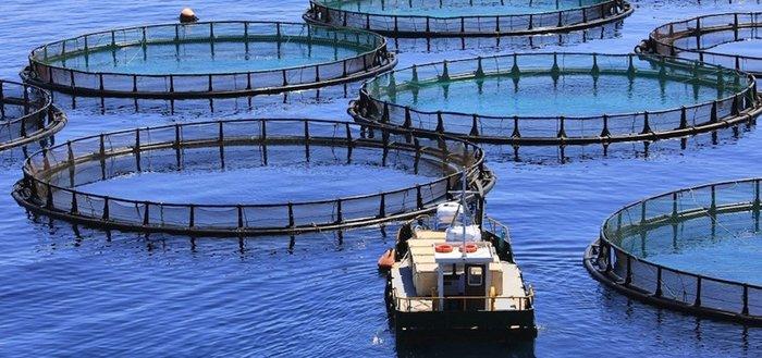 9 фактов о покупной рыбе