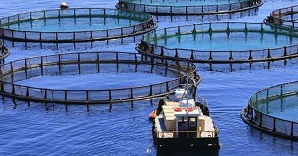 9 фактов о том, как выращивают рыбу на продажу. Это откроет тебе глаза на многие вещи!