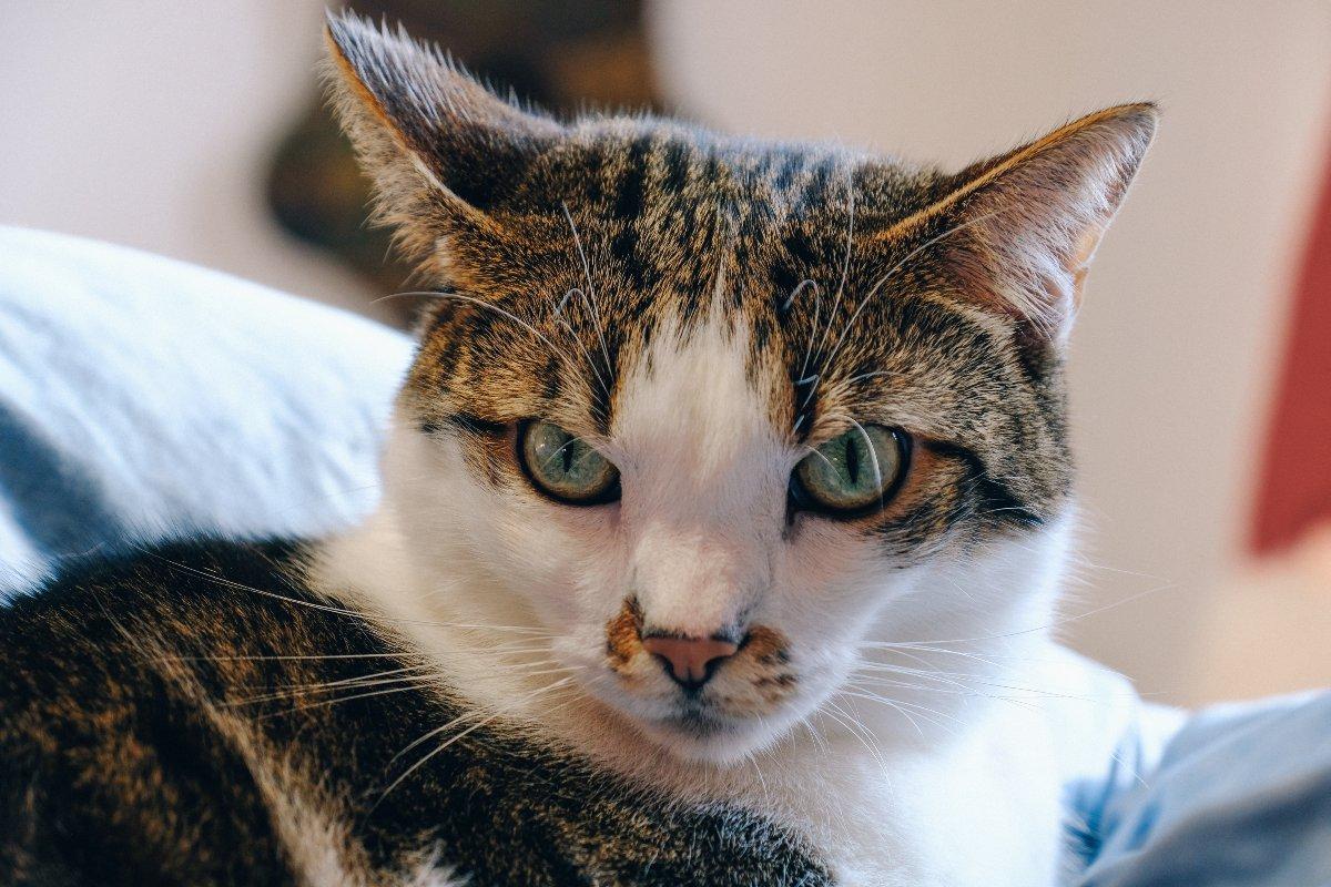 За что сердятся коты, когда мы их целуем