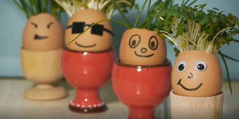 мини-сад в яичной скорлупе