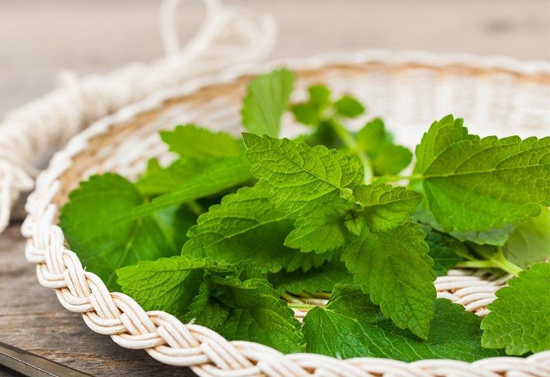 ароматические растения и эфирные масла