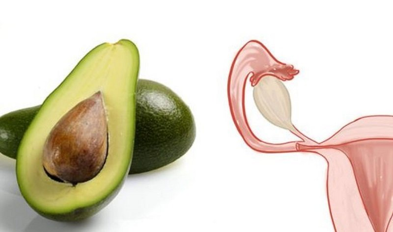 авокадо и матка