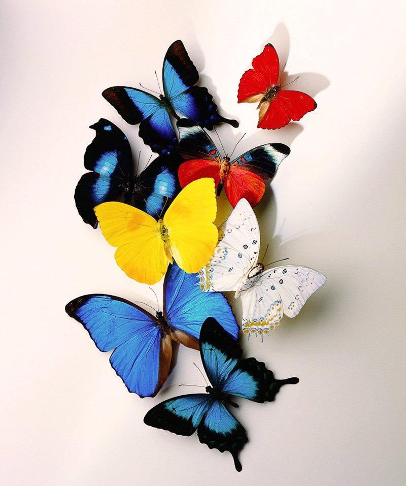бабочки на стену