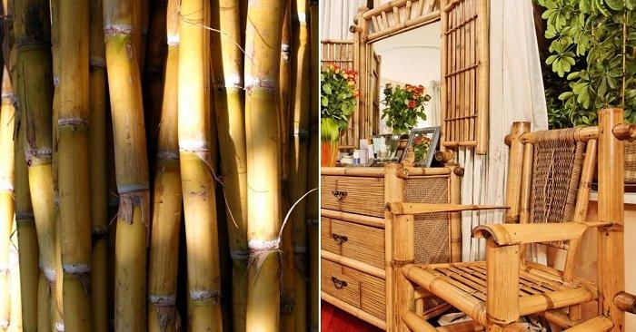 бамбук в интерьере своими руками