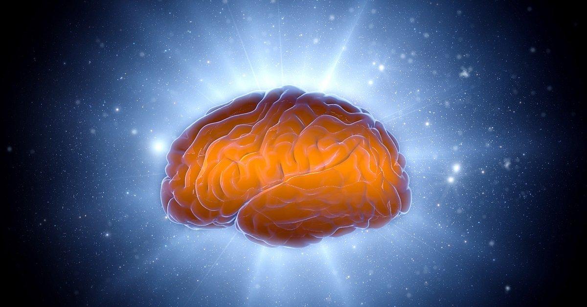 физиология мозга