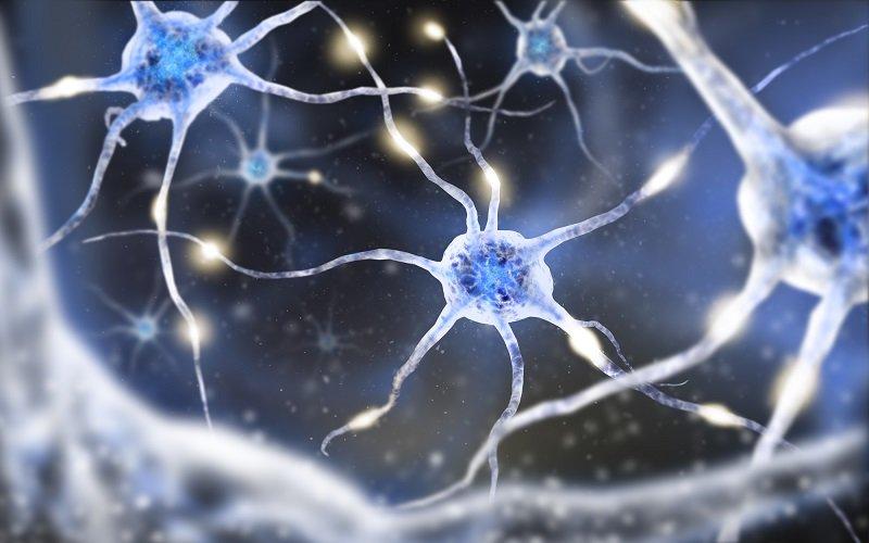 мозг и физиология мозга