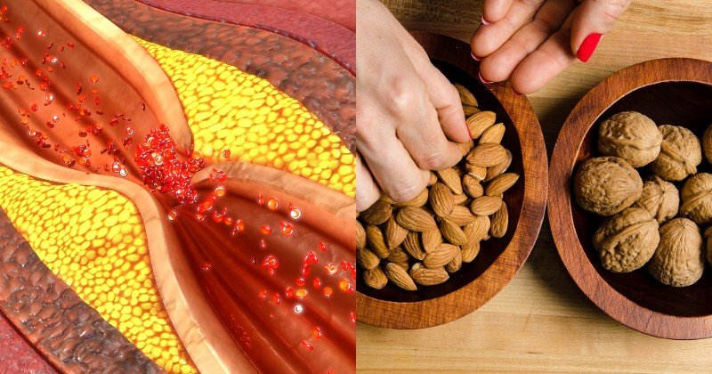 белковая диета вред и польза