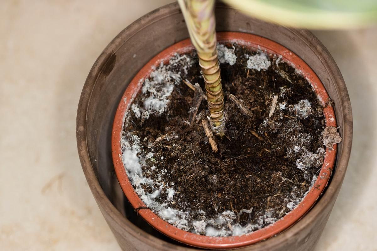 белый налёт на земле в цветочных горшках