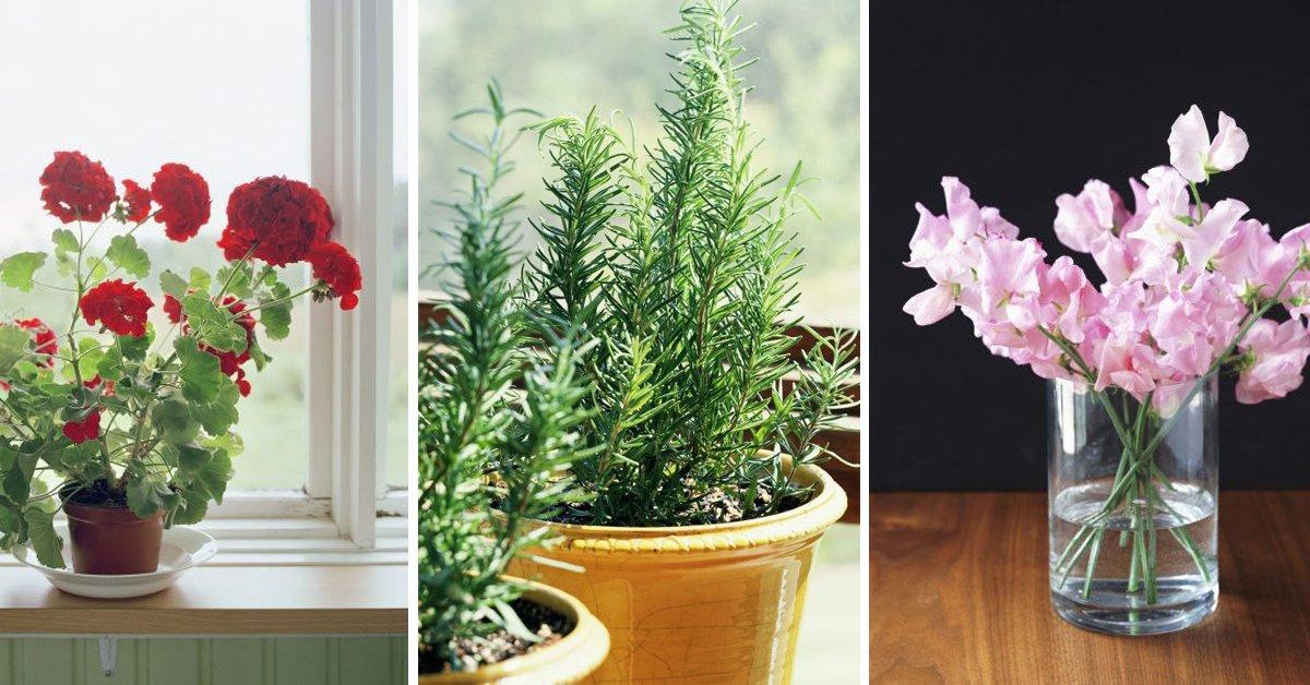 Плохие комнатные цветы