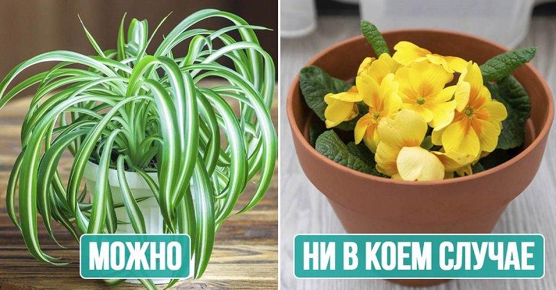 Большие растения, которым в спальне не место