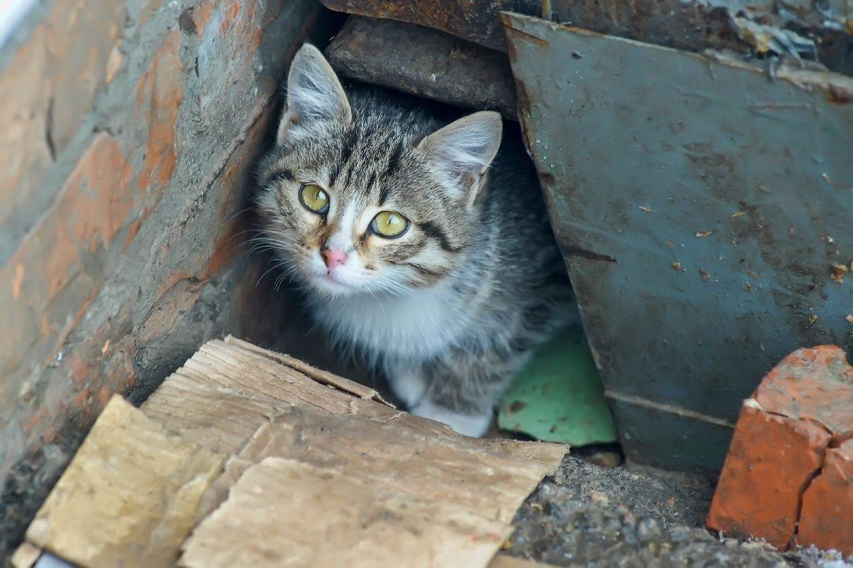 Почему нельзя запрещать ребенку приносить домой бездомных котят