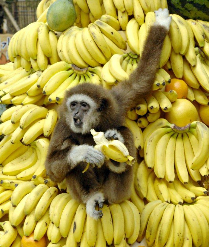 7 жизненных проблем, от которых можно избавиться при помощи двух бананов!