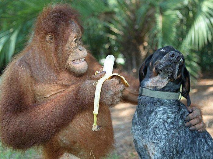 бананы улучшают настроение