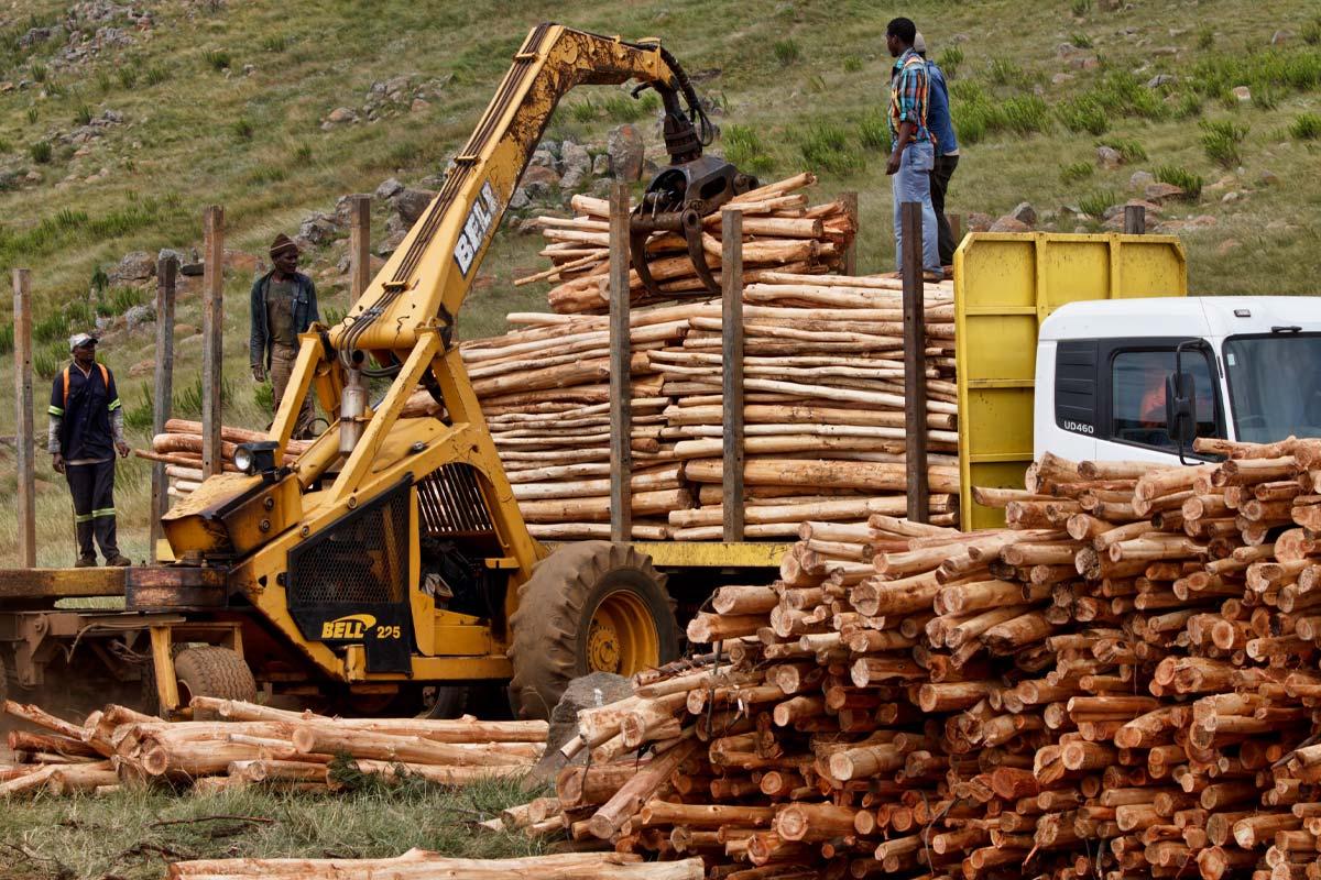 Строительные материалы бешено подорожали, пересчитываю бюджет на строительство дома Вдохновение,Дерево,Материалы,Металлы,Строительство,Цены