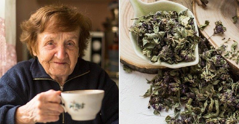 можно ли кормящим чай с душицей