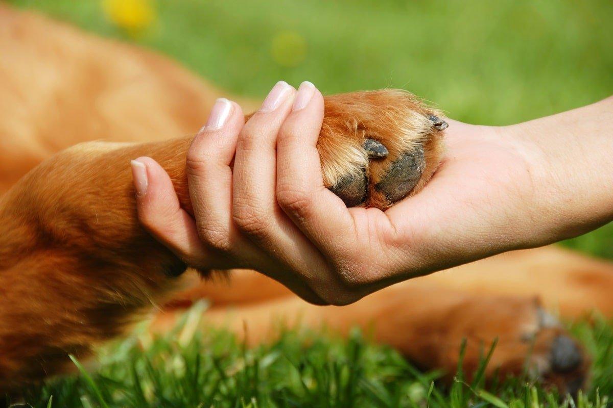Что говорит о человеке нежелание заводить домашних животных, по мнению практикующего психолога