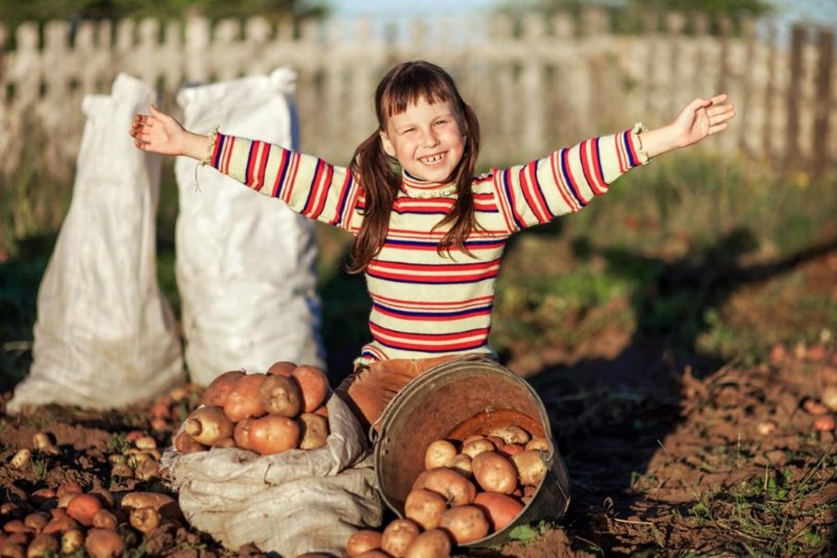 посадка картошка в зиму