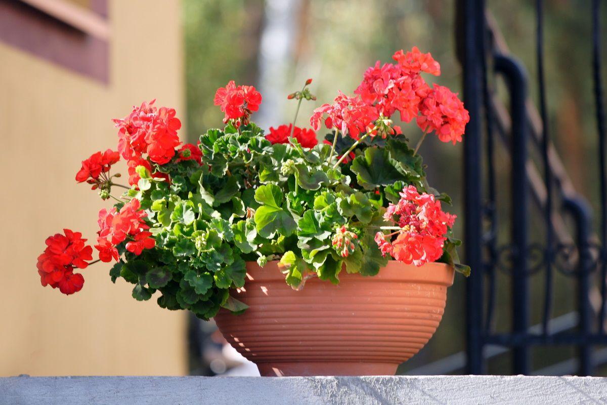 чем подкормить домашние цветы
