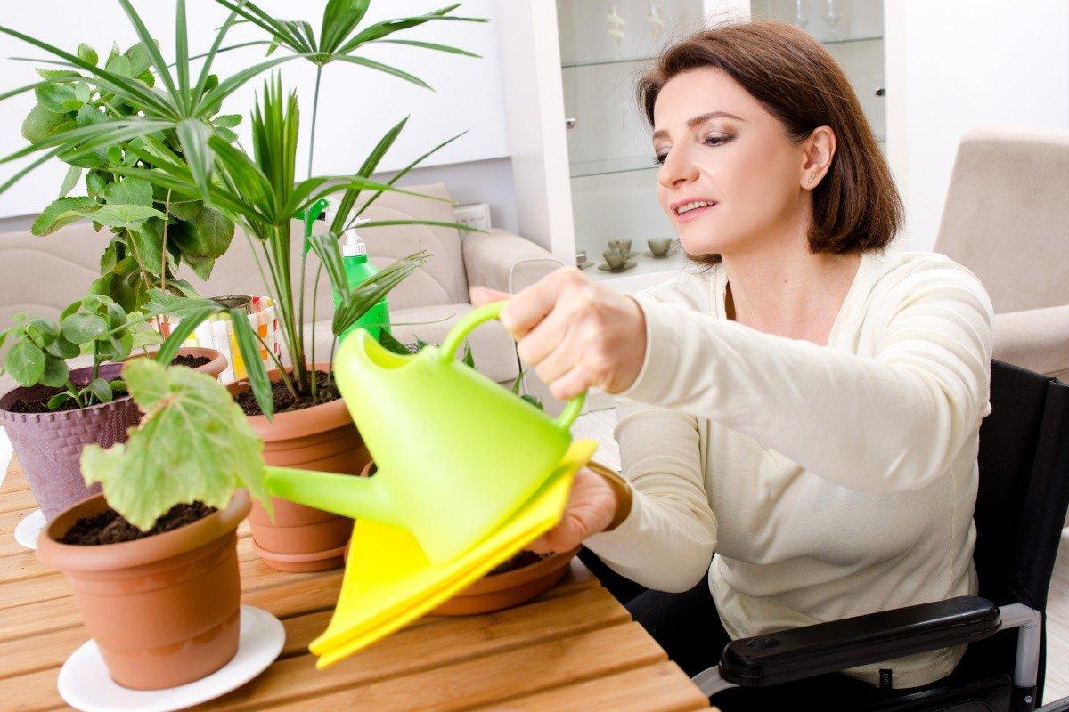 чем подкормить домашние цветы чтобы цвели