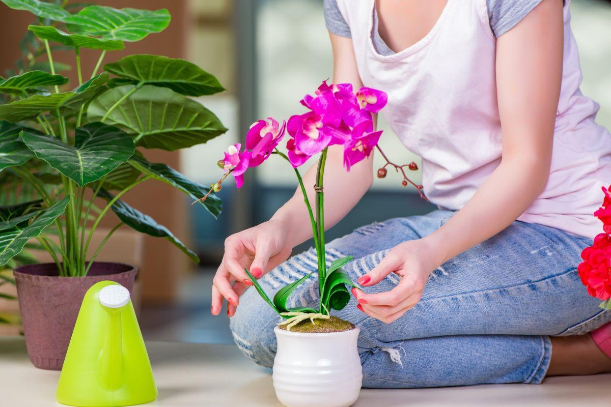 чем подкормить домашние цветы зимой