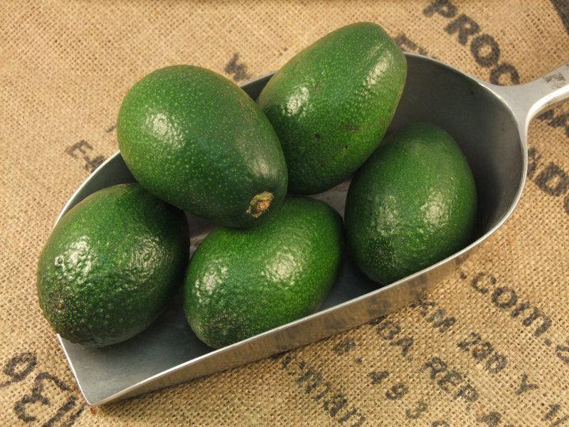 зеленые авокадо