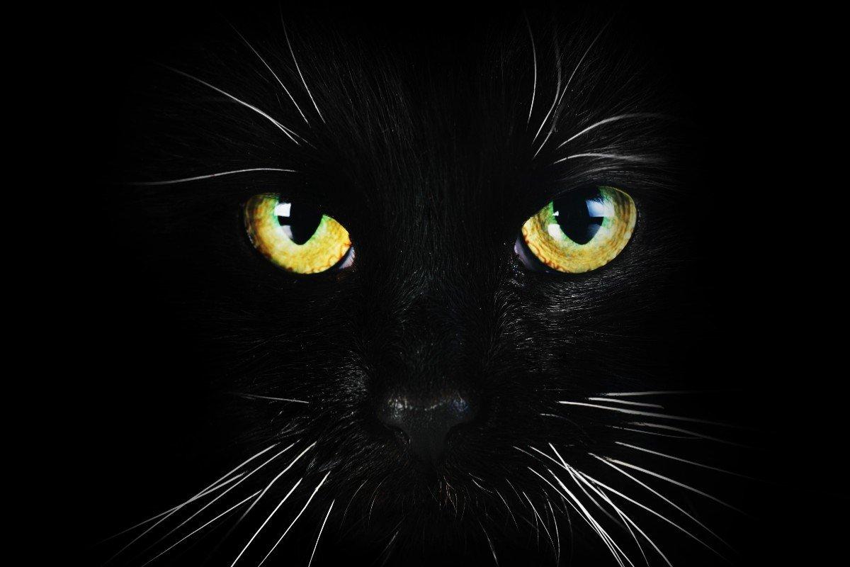 История страшной квартиры, где кот оказался жизненно необходим