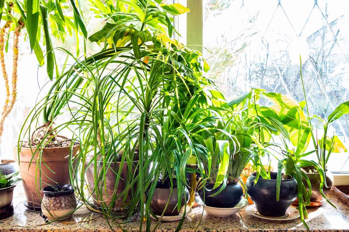 растения на солнце