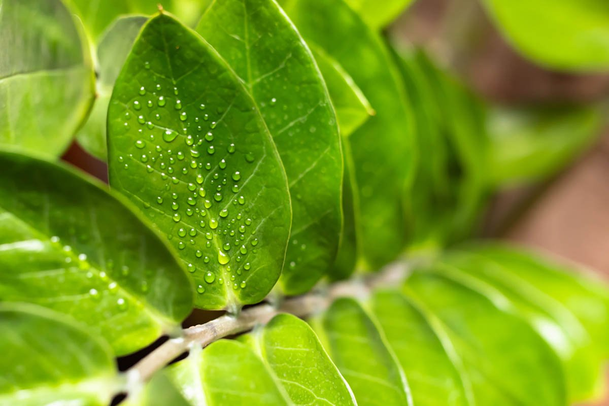 влага на листьях