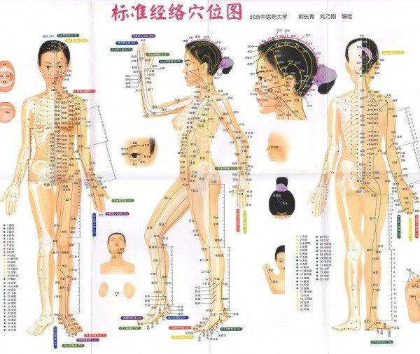 меридианы нашего тела