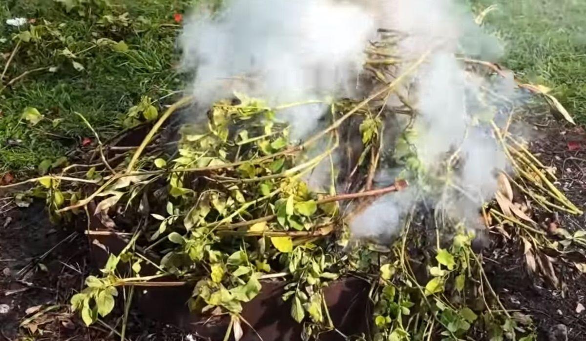 Почему нельзя сжигать картофельную ботву осенью