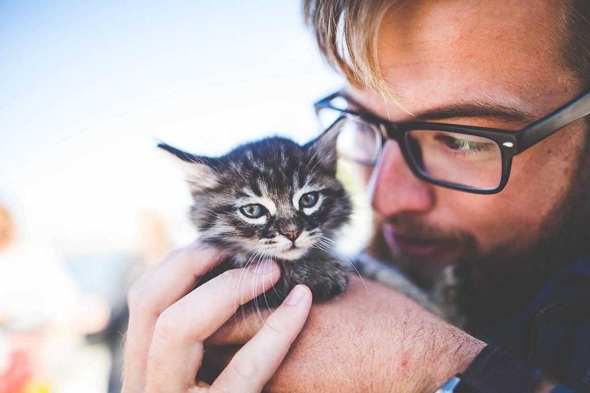 Шесть вещей, которые кошки на дух не переносят Вдохновение,Советы,Дом,Животные,Игрушки,Корм,Коты,Кошки,Питание,Питомцы,Уход,Уют