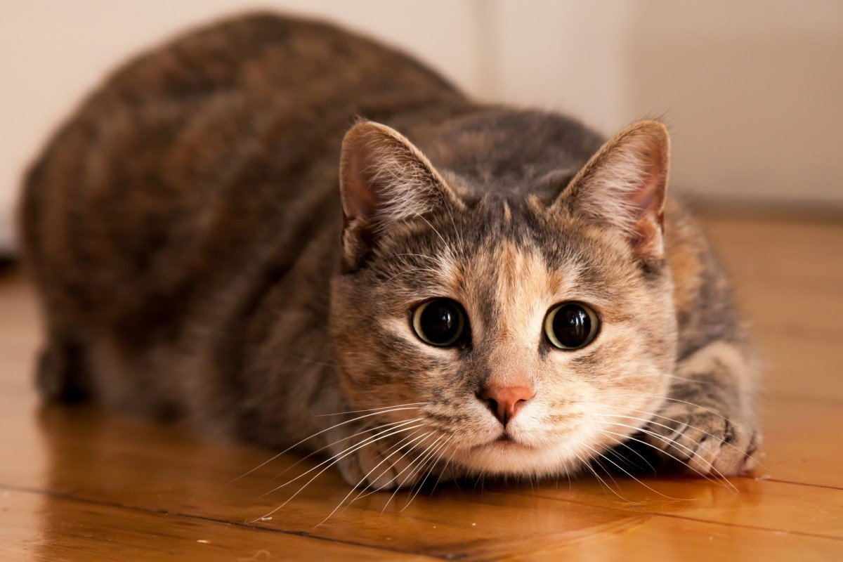 что не любят коты