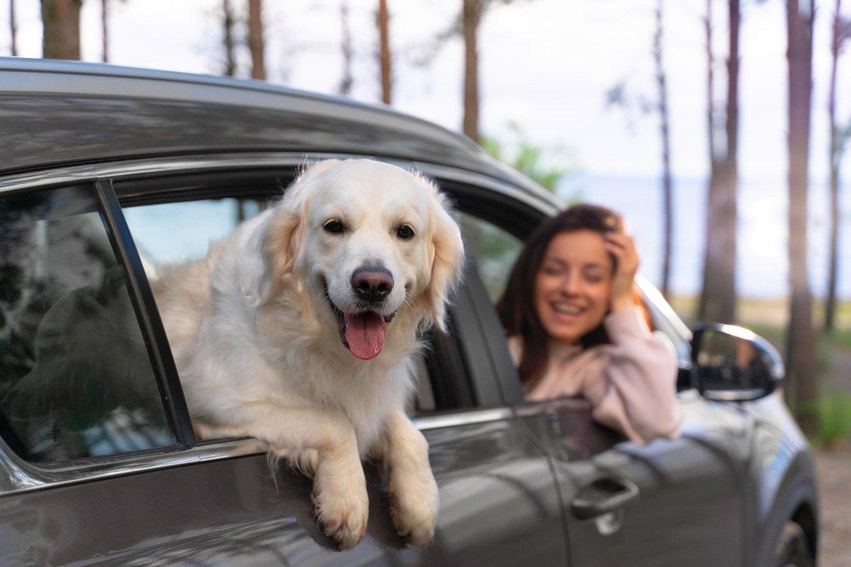 Собачник рассказывает, как показать свою любовь и преданность собаке