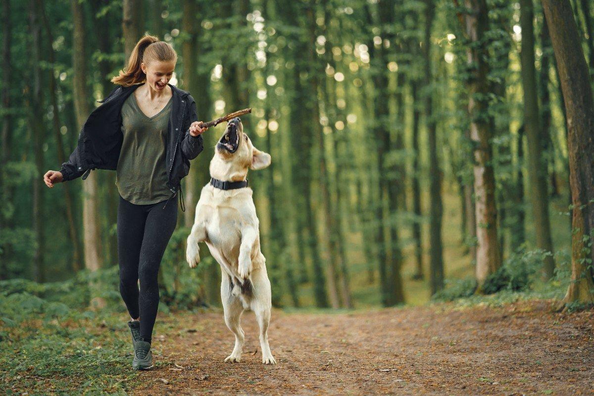 Собачник рассказывает, как показать свою любовь и преданность собаке Вдохновение,Советы,Животные,Питомцы,Собаки
