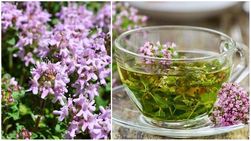 какие травы заваривать вместо чая