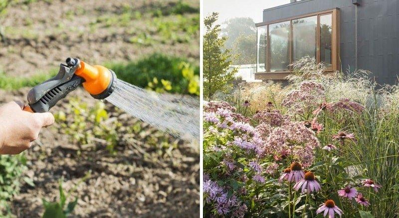 Какие клумбы с травами посадить на даче в сентябре