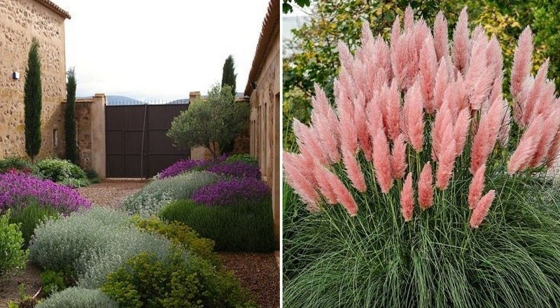 Что посадить осенью: подборка осенних клумб с травами
