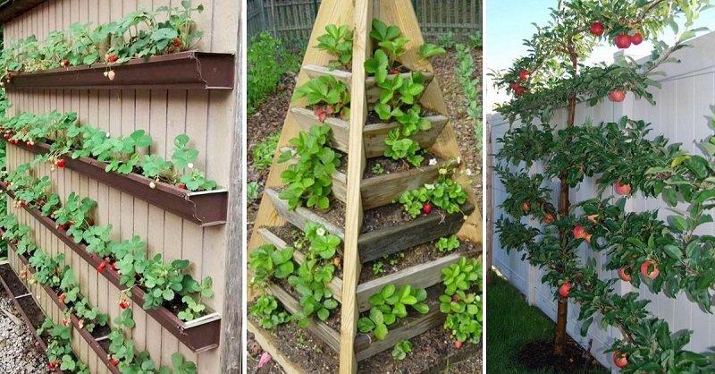 Жадная до работы в саду дачница показывает, что сажает на крохотной даче