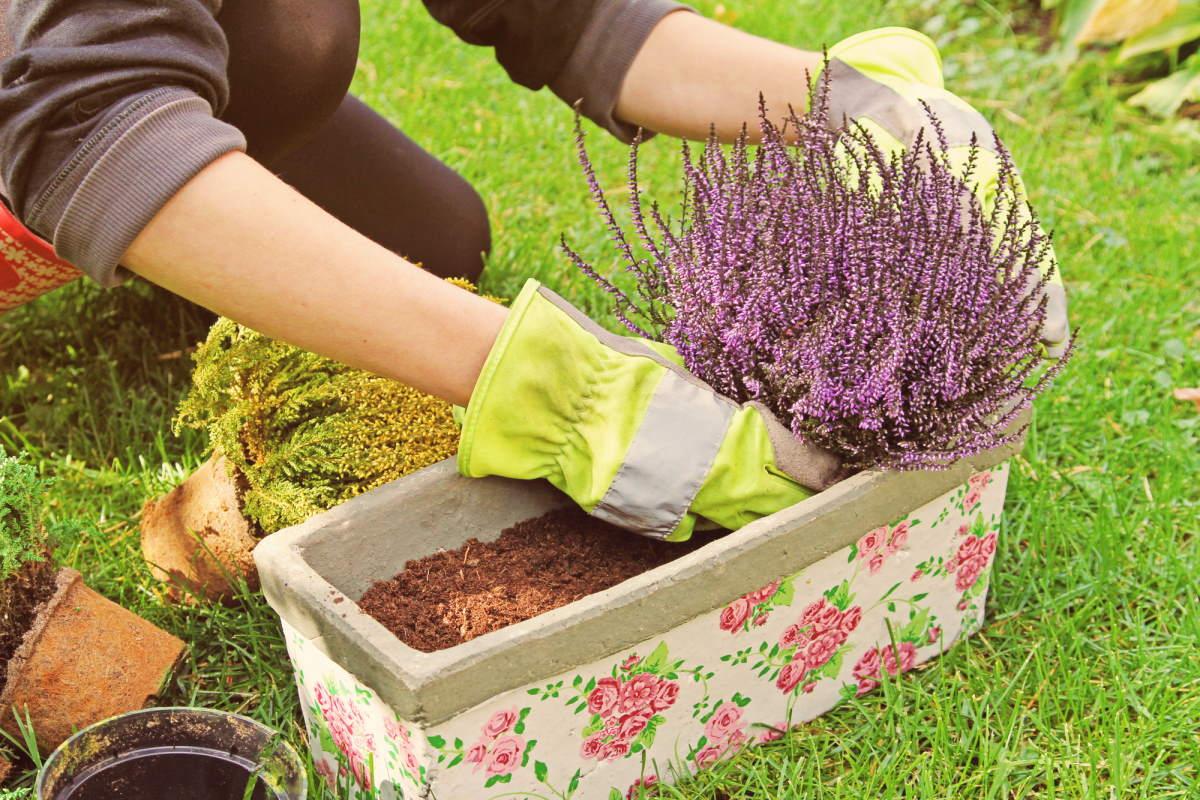 Что посадить в саду