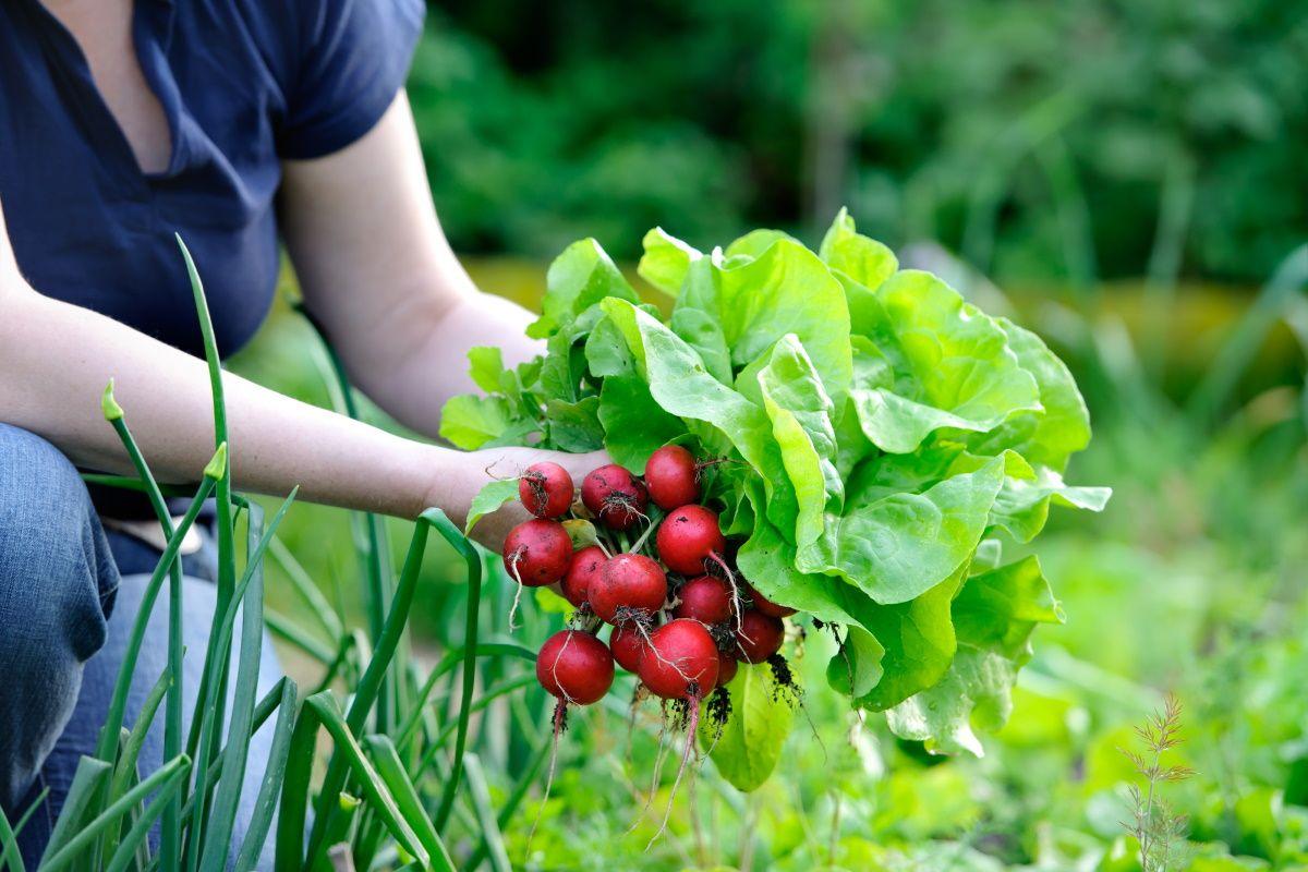 Что сажают в июле опытные дачники и на какой урожай рассчитывают