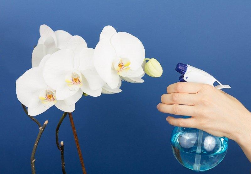 как заставить орхидею цвести круглый год
