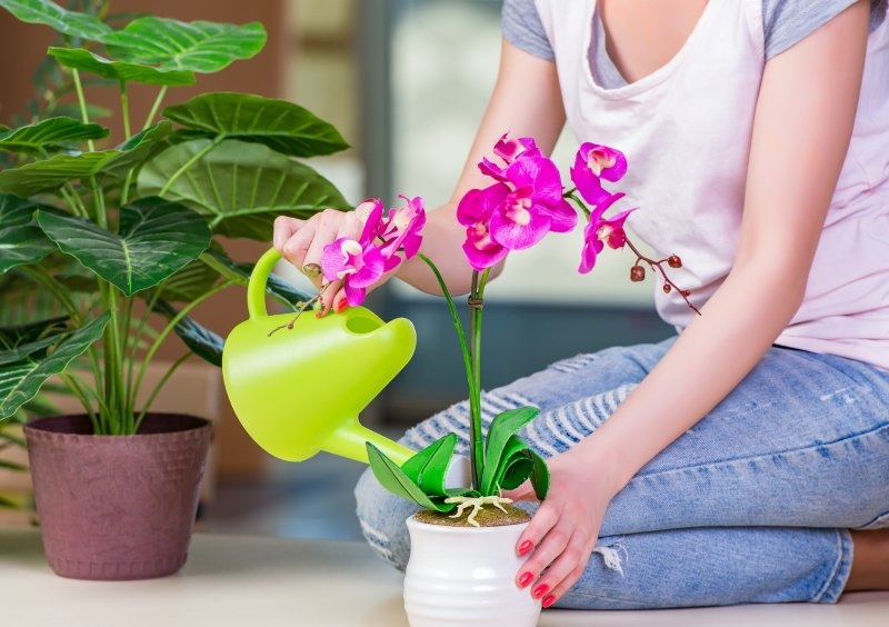 цветение орхидей в домашних условиях