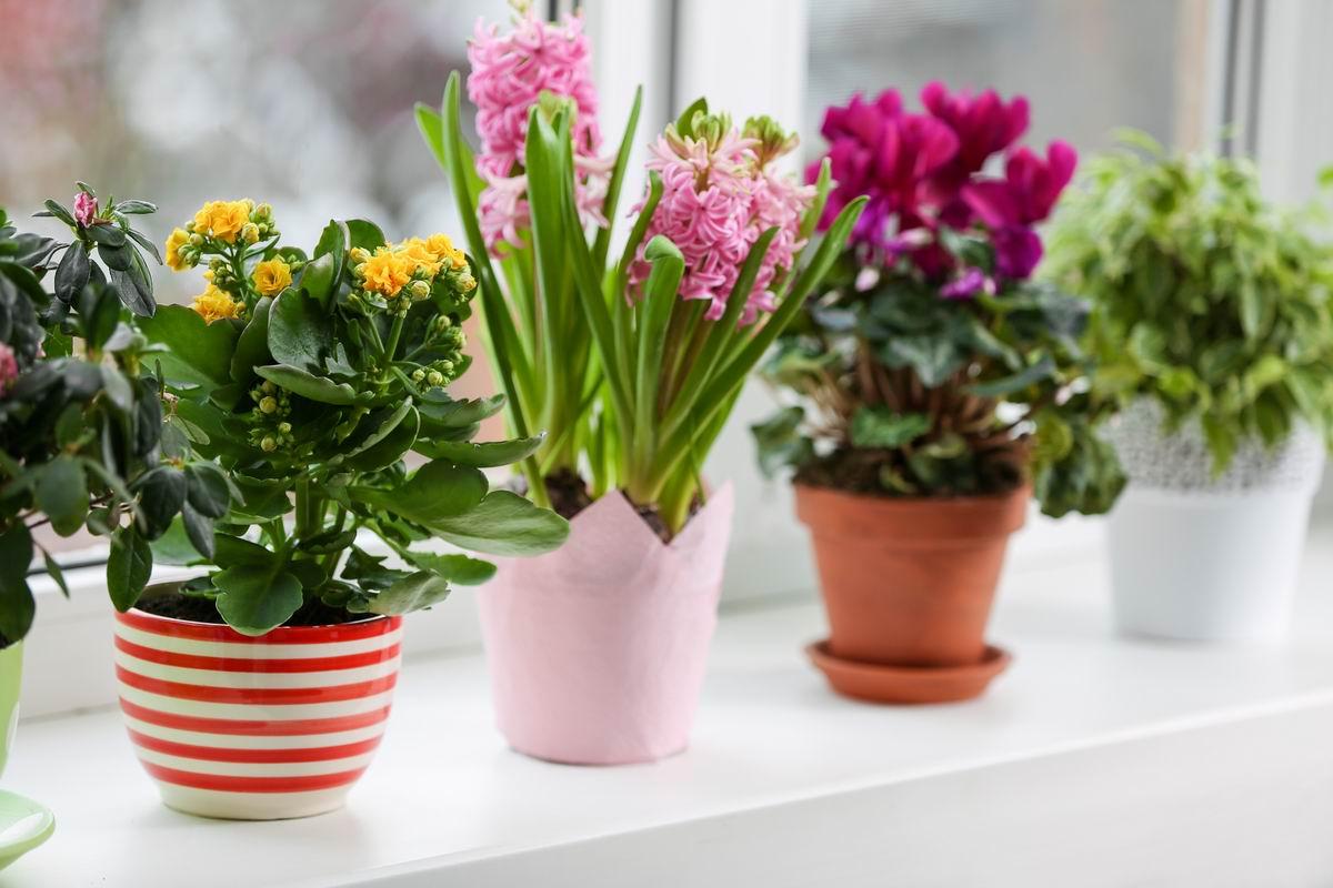 цветение растений по месяцам