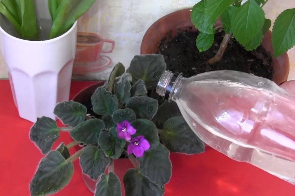 цветение растений аллергия