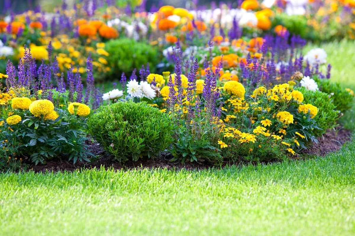 Какие цветы посадить в цветник на даче