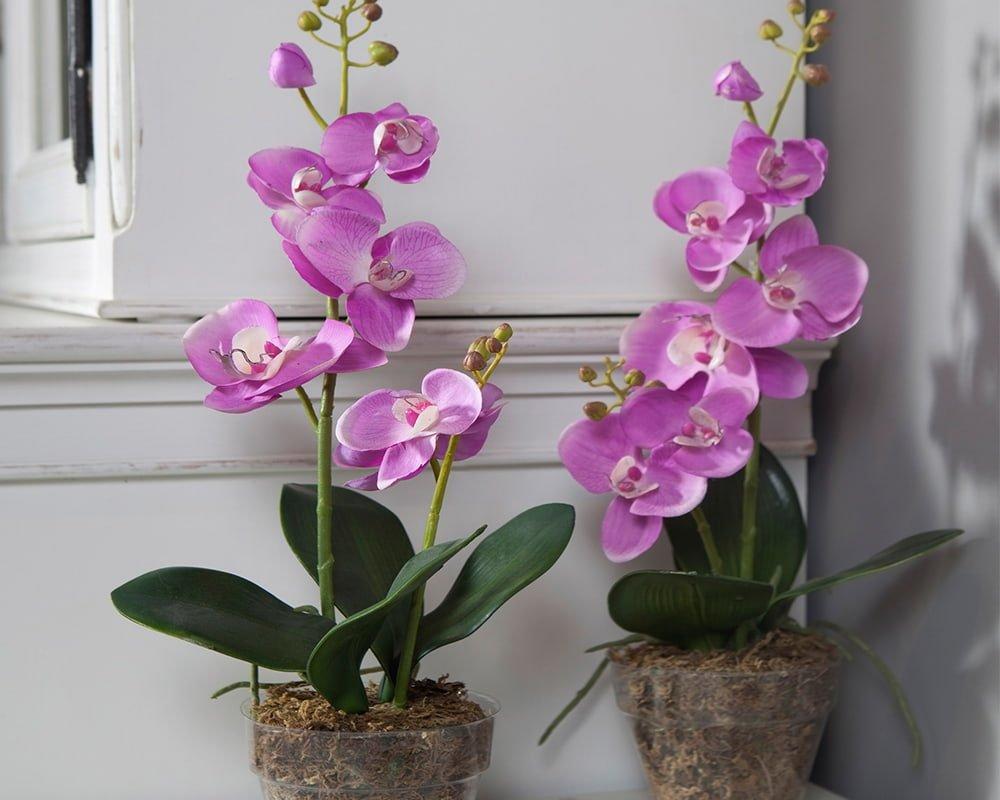 От чего зависит толщина и длина цветоносов орхидей